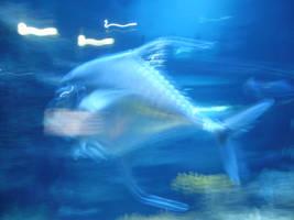 Streamer Fish by wildmage007