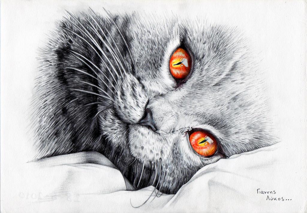 Hello kitty, goodmorning..