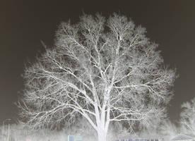 Ice Tree by BeestOBurden