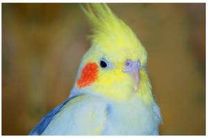 My cute parrot..