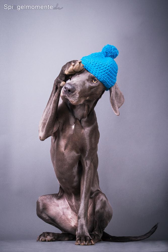 Studio Dog by Spiegelmomente