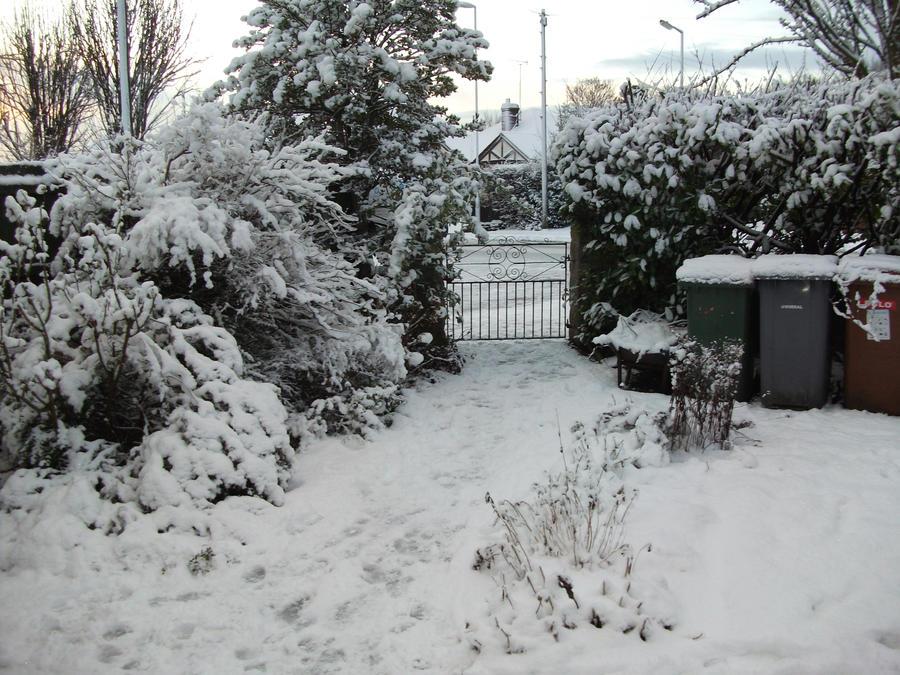 Snow-4 by Floppy-Doggie