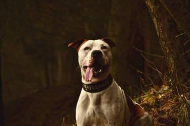 Dogg3