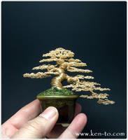 Exhibition grade wire bonsai tree by Ken To by KenToArt