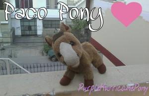 PurpleHurricanePony's Profile Picture