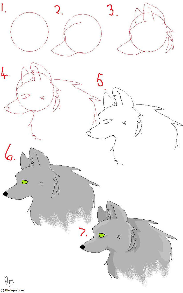 How To Draw a Wolf -Head- by Flimingow on DeviantArt