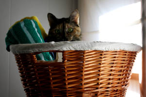Comfortable Cat by Tzinipa