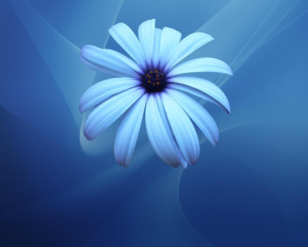 blue flower wallpaper by sarman on deviantart
