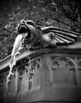 gargoyle by LucysPhotography1991