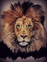 Lion by 4DarKop5