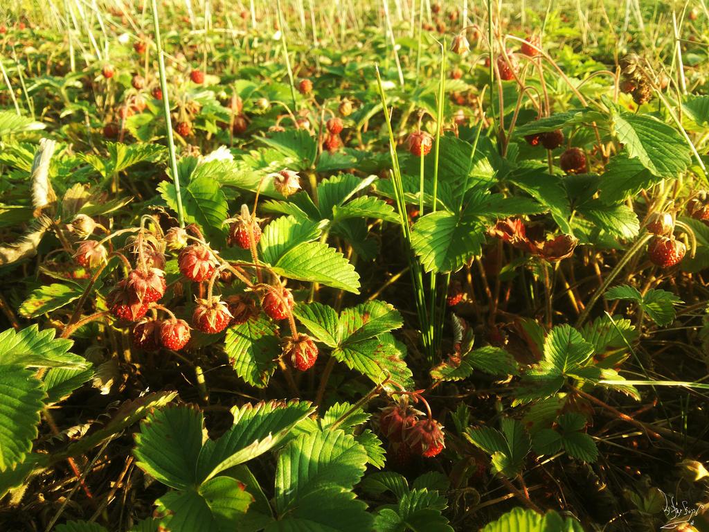 Strawberry by 4DarKop5