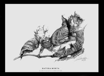 Natura-morta by santiagocarranza