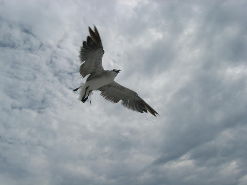 in flight_0038 by flordelys-stock