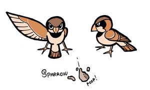 Sparrow by Eidog