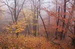 Veil of Autumn