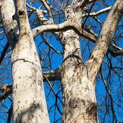 dance of the trees by alban-expressed