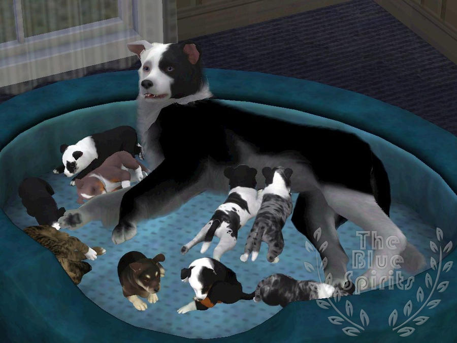 Litter puppies and others by spiritythedragon on deviantart