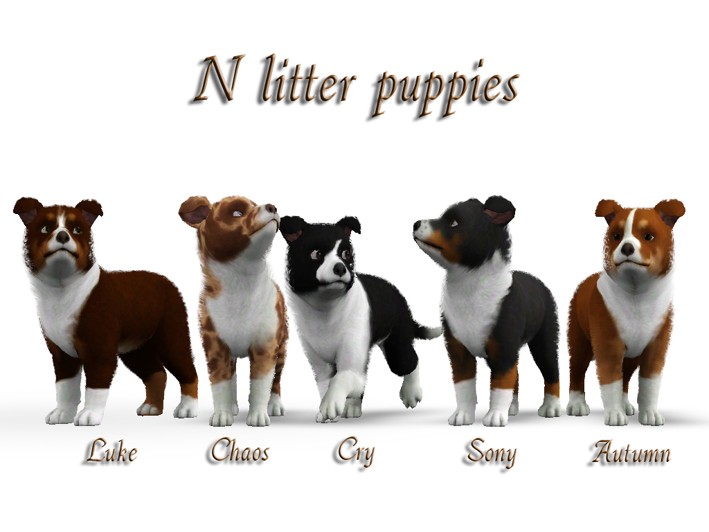how to raise a litter of puppies