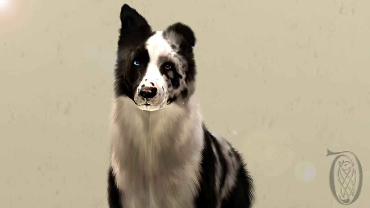 Blue Merle Sims 3 Border Collie - Reality's Maze by SpirityTheDragon ...