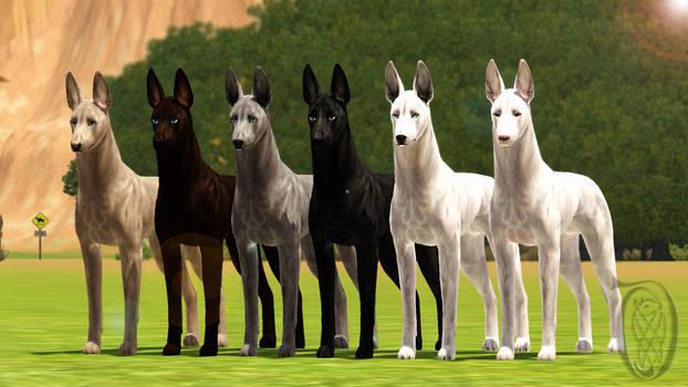 Sims 3 Pets - Krahviik Shorthair