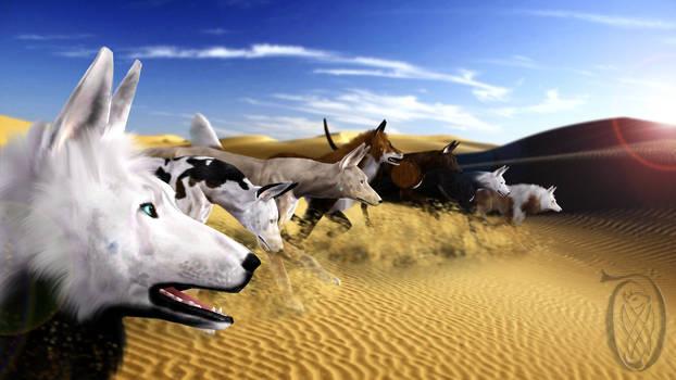 Krahviik Dogs preforming persistent hunting
