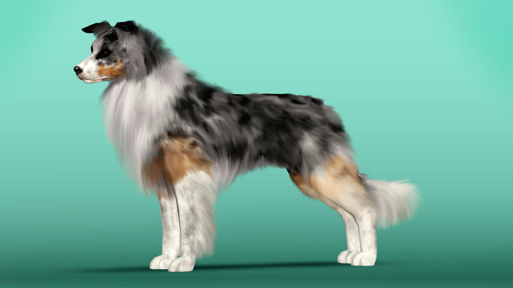 Sioms  Dog Breeds
