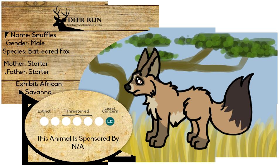how to draw bat-eared fox