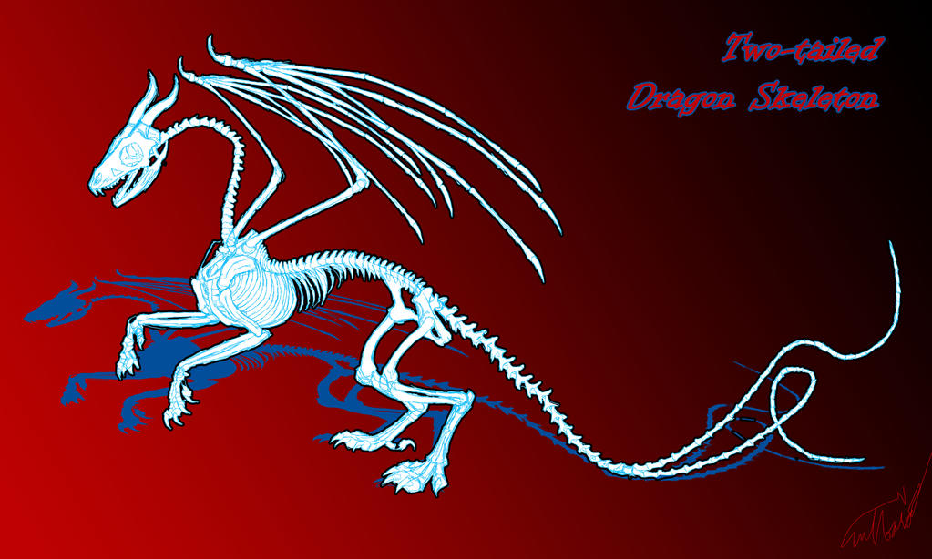 Dragon Skeleton - rough sketch by nykol-haebrd