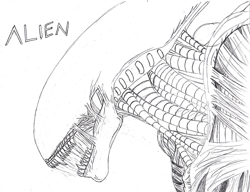 Xenomorph by r0b0t r04dklll on deviantart for Xenomorph coloring pages