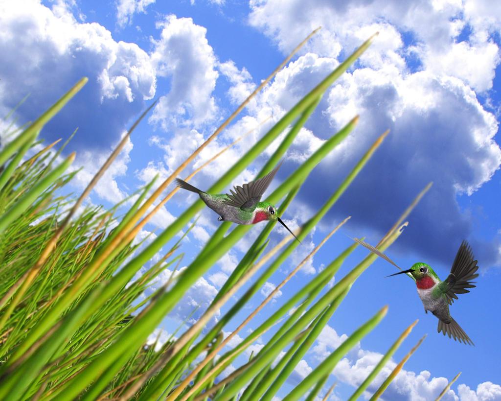 Vista grass evolution II by moroka
