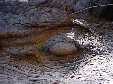 Photo: Elephant Eye Fallen Log
