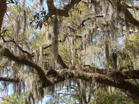 Photo: Georgia Trees