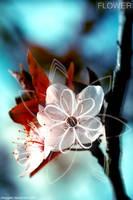 .flower by meggert