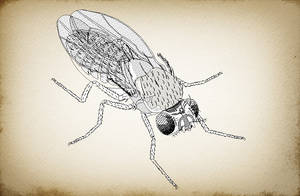 Mosca (Fly)