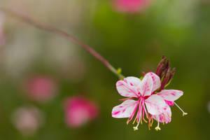 flower 8 by elspeth-66