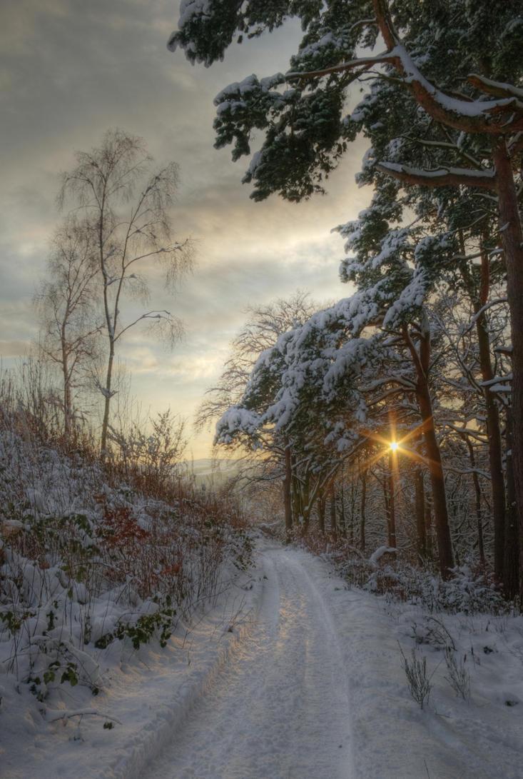 Pirn pines by Raghnall