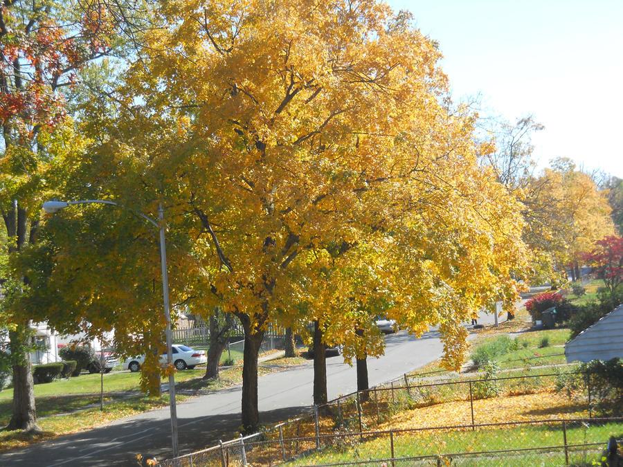Beautiful Fall Trees by Gamerbro014