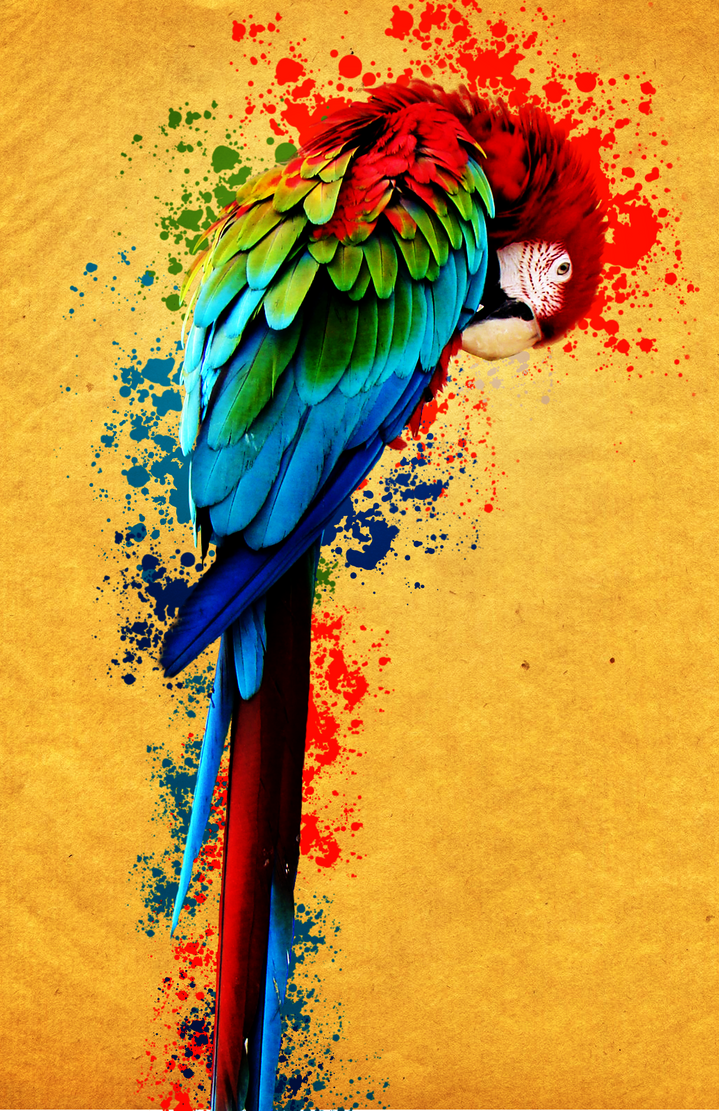 Colorful parrot drawing