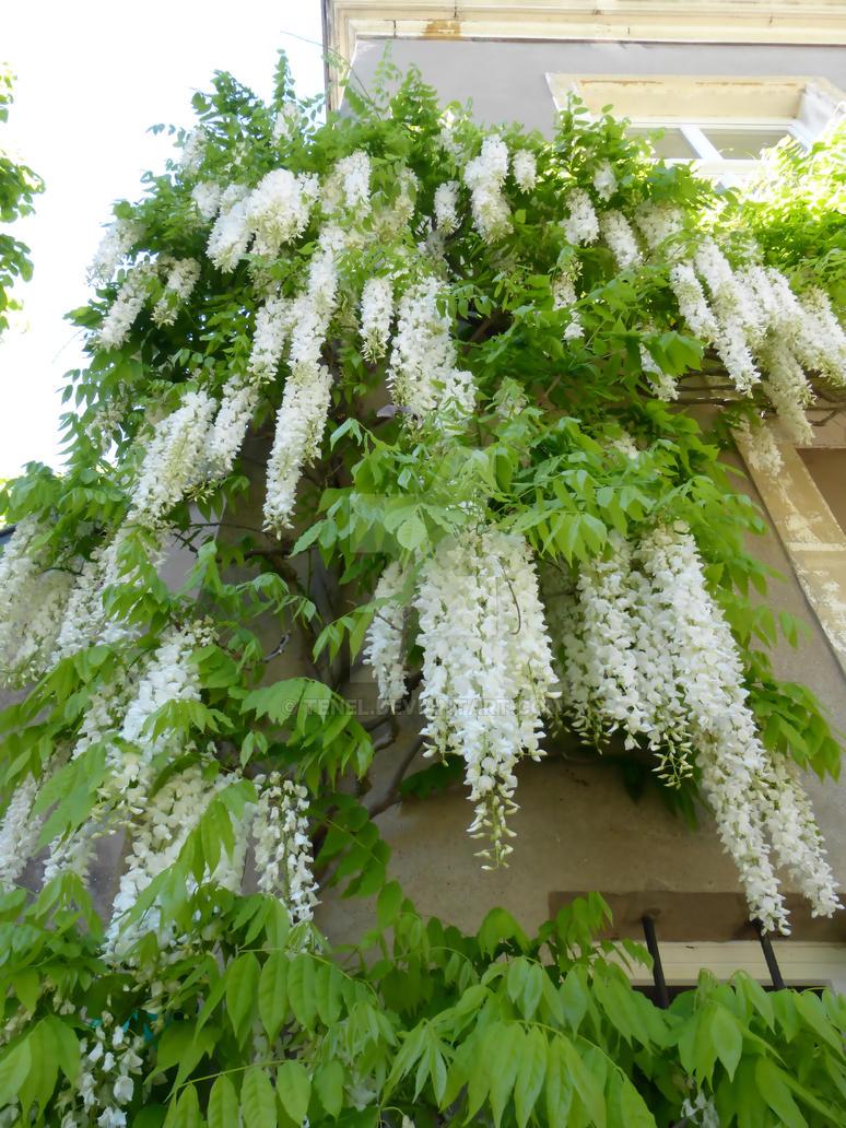 Montigny les metz 59 jardin botanique by tenel on deviantart for Jardin fabert metz