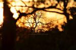 Sunrise #3