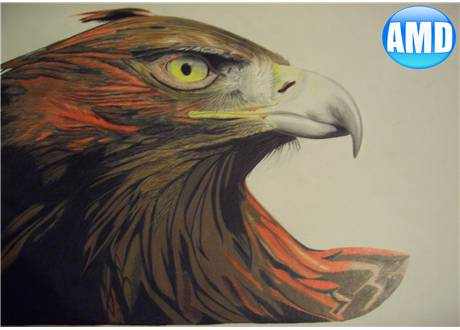 Eagle Drawing by AndrewMooneyDesign