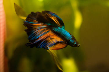 Genie's Colours by EmeraldRosepetal