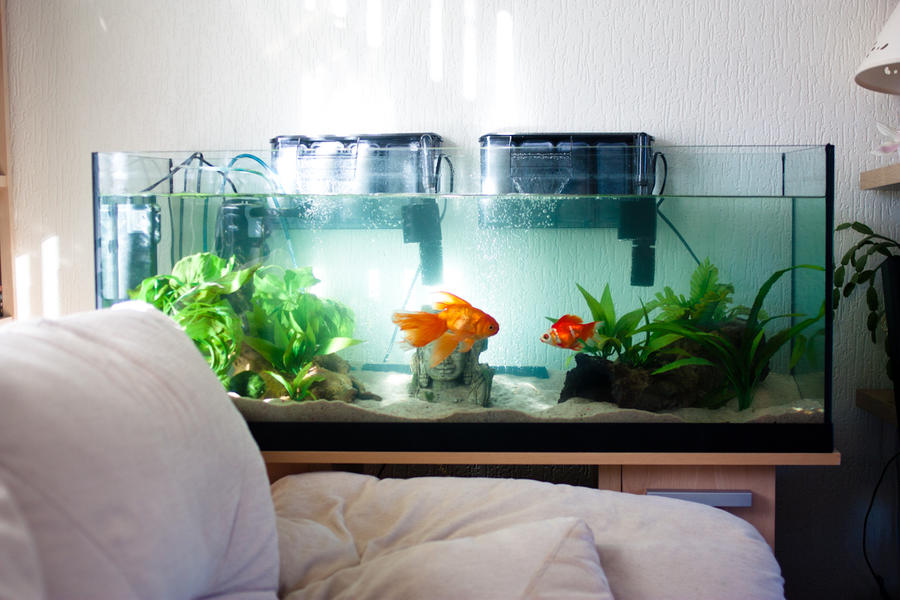 Goldfish tank by emeraldrosepetal on deviantart for Aquarium decoration for goldfish
