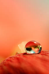 Dew drop by animlogic