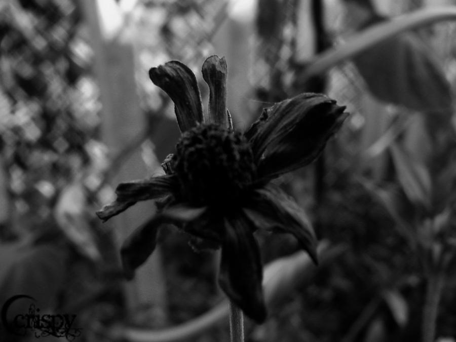 Dead Flower By C Crispy