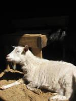 Day and Night by Sibtigerka-Goatgirl