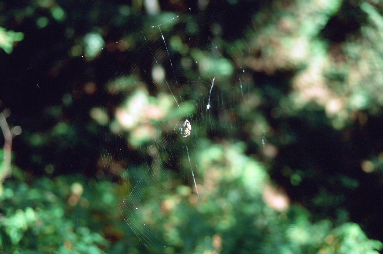 spider by acollins973