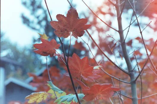 Fall film 2