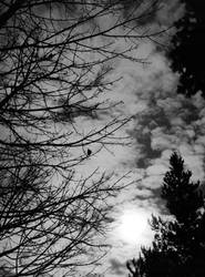 sun, clouds, trees by acollins973