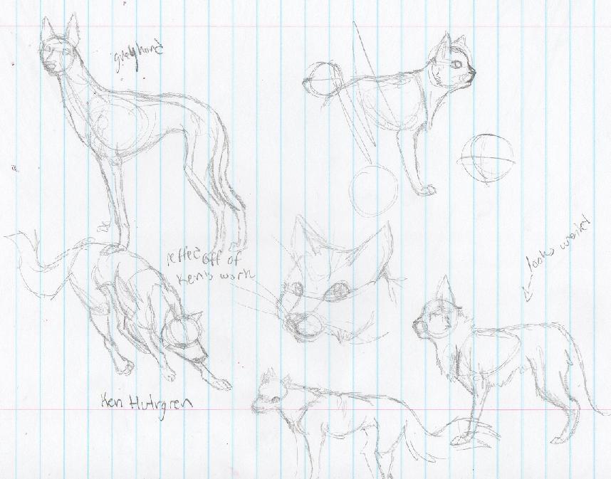 Animal Anatomy Help!